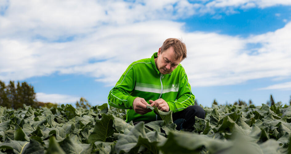 Boost the boron and calcium levels in late season brassica crop
