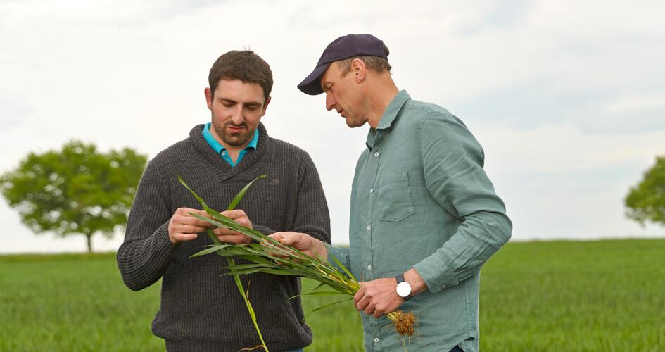 Have you considered Spring NPKS compound fertiliser