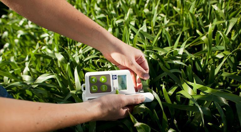 Un agriculteur effectue une mesure N-Tester dans un champ de blé