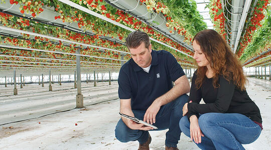 How proactive fruit growers monitor their crops