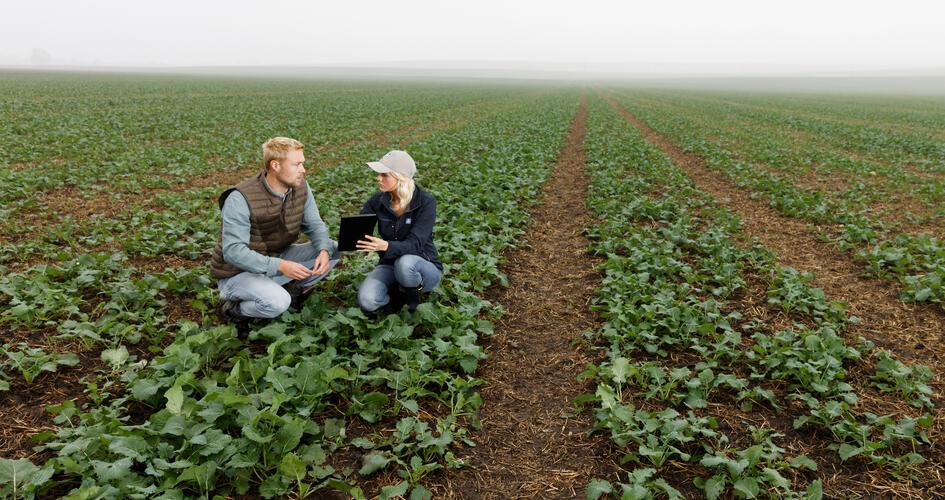 How better nutrition can improve oilseed establishment