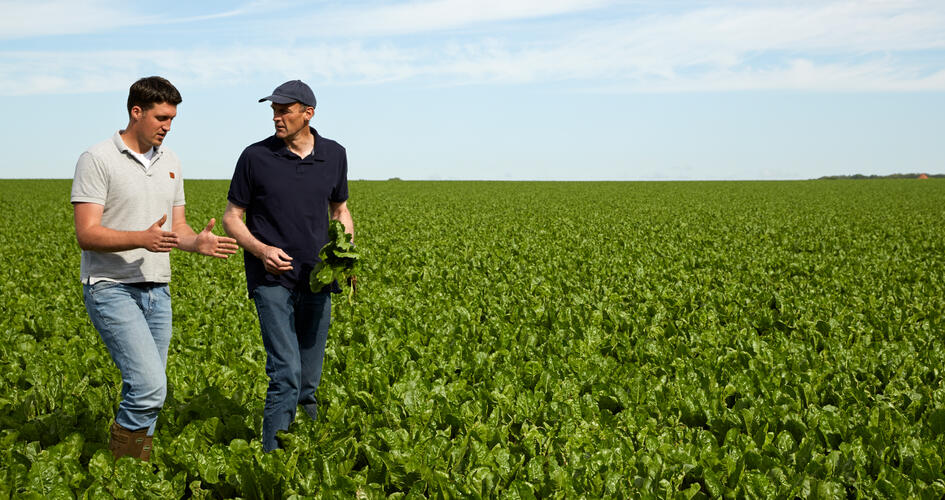 Nutrient management for optimal sugar-beet growth and development